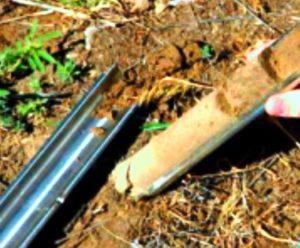 Soil sample in core sampler